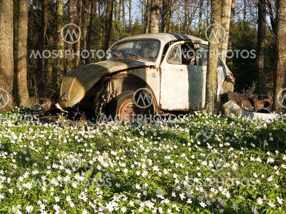 VW blandt en