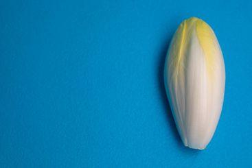 Chicory, endive, succory