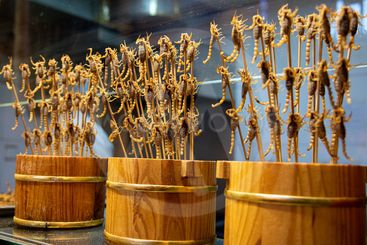 Cooked and tasty Scorpions on a stick
