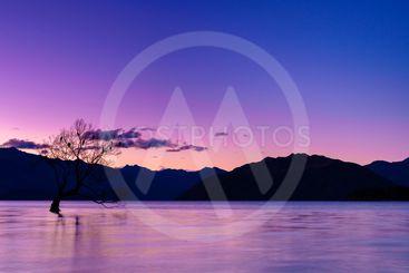 That Wanaka tree, Lake Wanaka, New Zealand.
