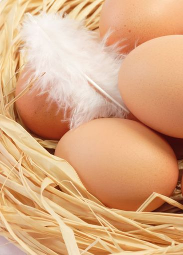 Eggs with white Feather
