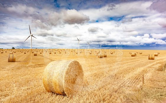 Windmill turbines in a agricultural landscape with...