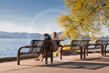Park Bench by the Lake