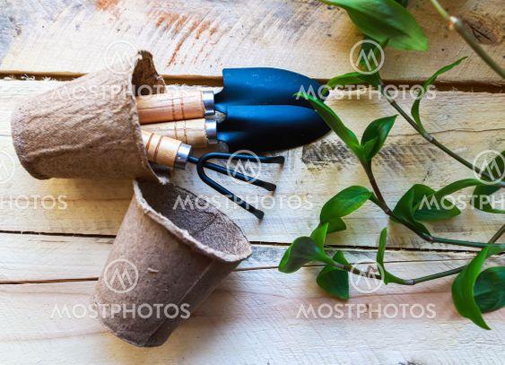 Green fresh plants, pots, rake and spade