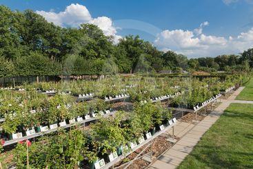 Dutch garden centre selling plants
