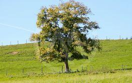 autumn tree meadow