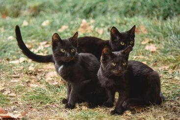 Three angry kittens look at something with wild eyes
