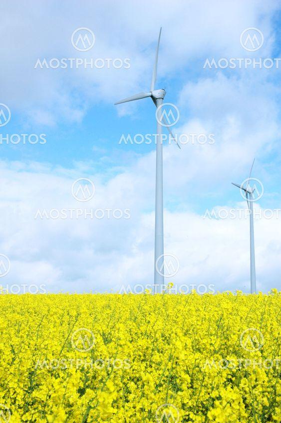 Windmill on Field of Gold