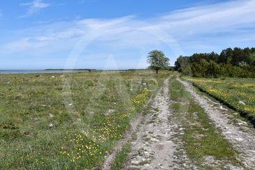 Brukningsväg vid en vacker sjömark på Öland