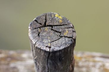 wooden fence posts close up