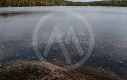 Höstlöv på sjön