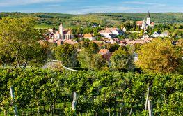 vineyard near Pulkau in Austria