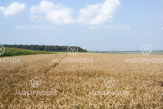 crops countryside