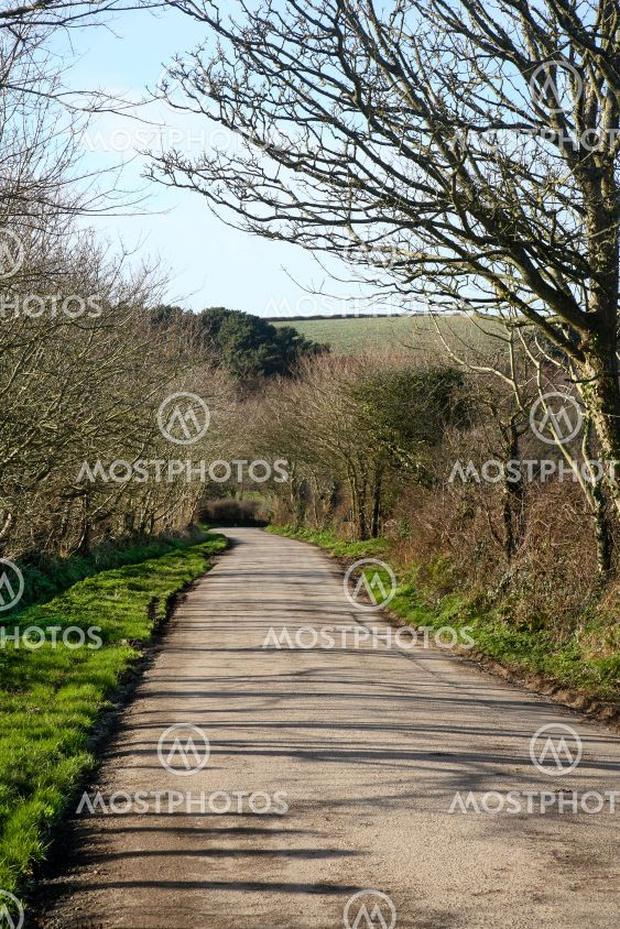 Vertical view of a countryside lane.