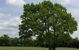 Backdrop of Tree