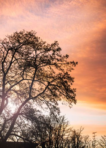 trees silhouettes and roofs in the city on a beautiful...