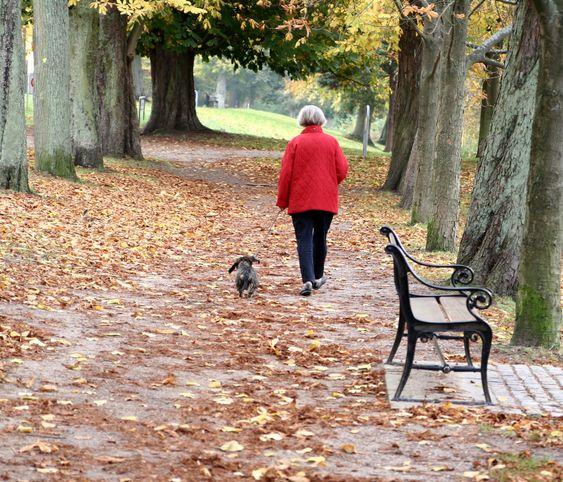 kävely koira
