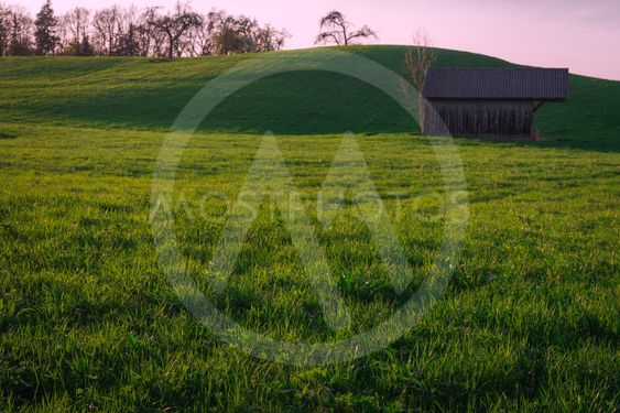 Green grass meadow in the evening sunlight