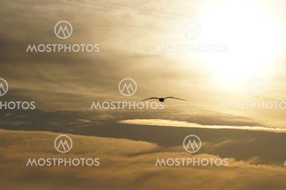 Utsikt ibland molnen