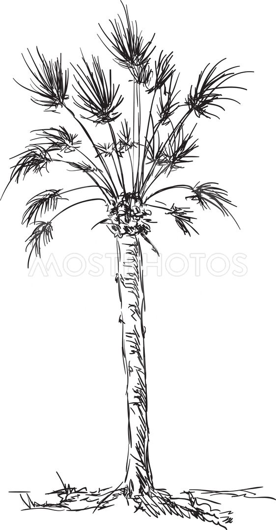 big palm isolated