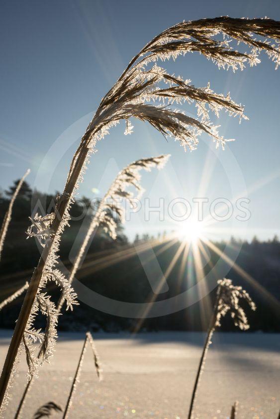 rimfrost på vass en strålande vinterdag