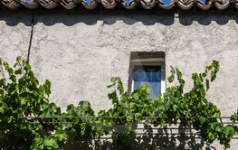 Wall with window and grape vines