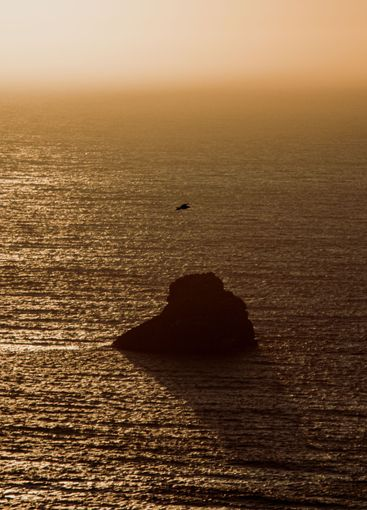 Seagull flying over the ocean during a sunset