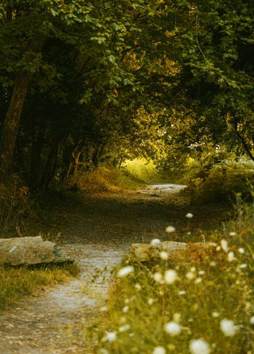 Path through the forest on summer tones