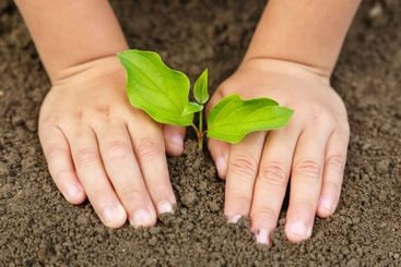 Planting tree child hands plant nature life ecology...