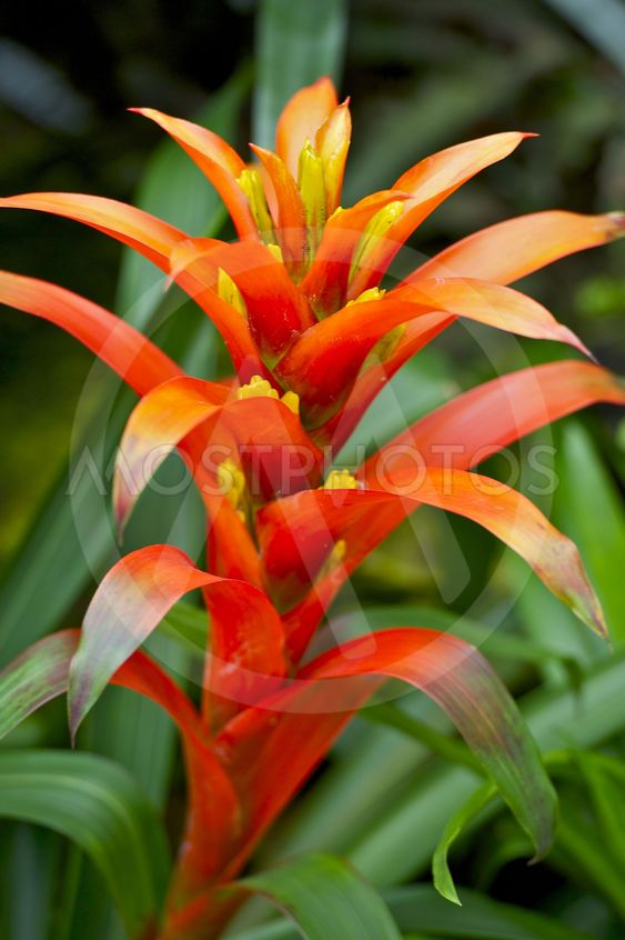 Red Tropical Flower