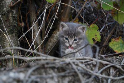 Small grey cat 2