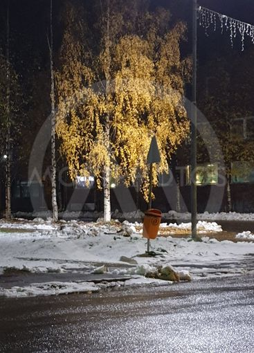Gula löv i träd