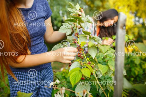 Happy little girl during picking berries in a garden...