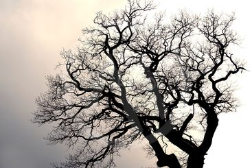 Silhouette of a leafless tree.