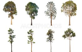 Collection of Isolated Trees on white background.