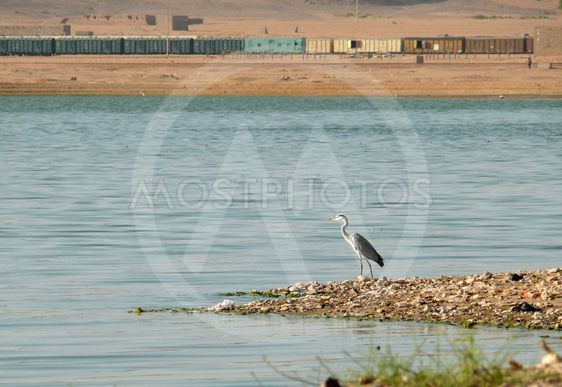 Lonely heron on the banks of the Nile.