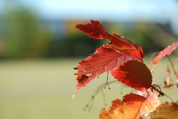 Autumn Red / Green