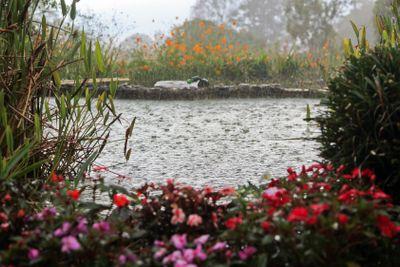 Rain on a Pond