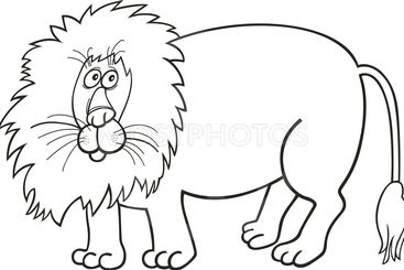 African lion for coloring book
