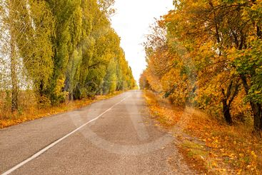 Road with autumn trees on the side of the road.