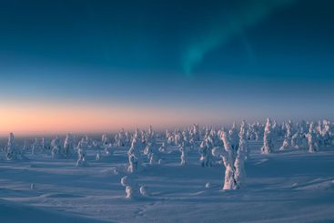 Snow covered trees in the morning light with aurora...