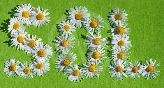 Text SOL with flowers, means sun in several languages.