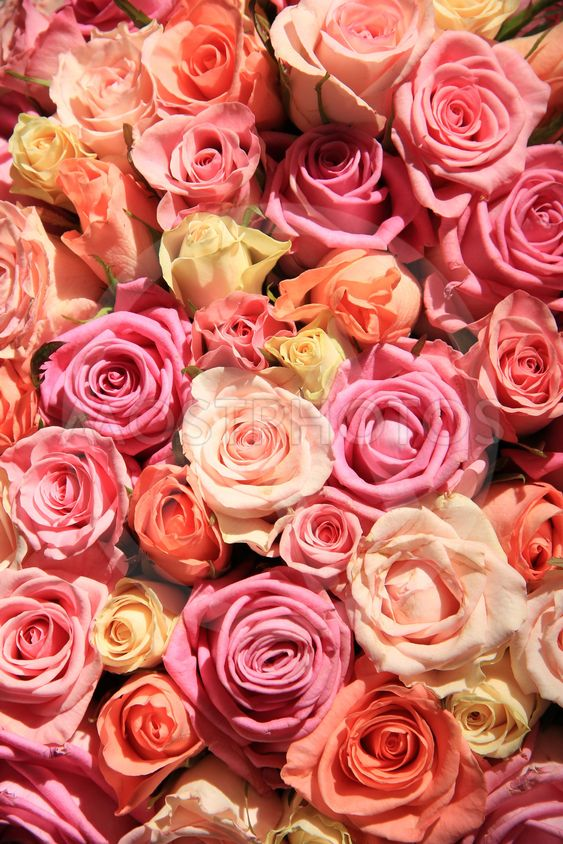 Roses in different shades of pink, wedding arrangement