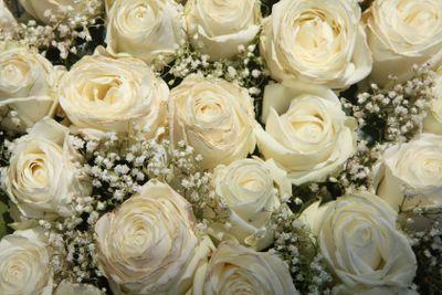 White roses and Gypsophila/Baby's Breath