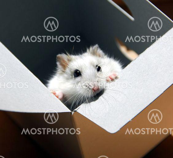 Hamsterin tekstikehyksen