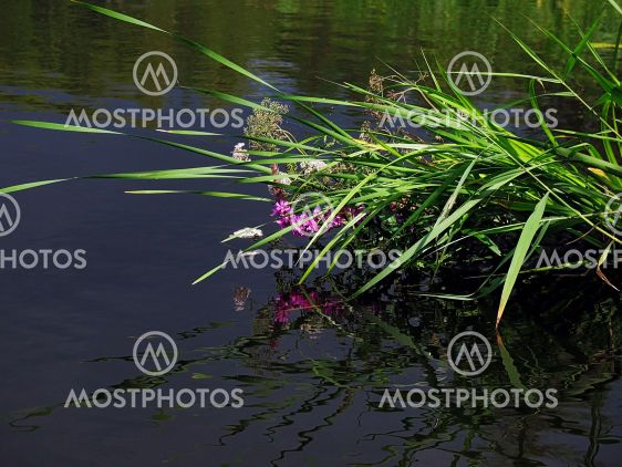 reflected flowerses