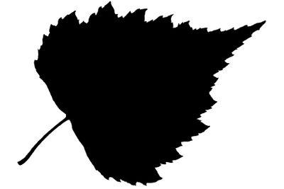 Black leaf isolated