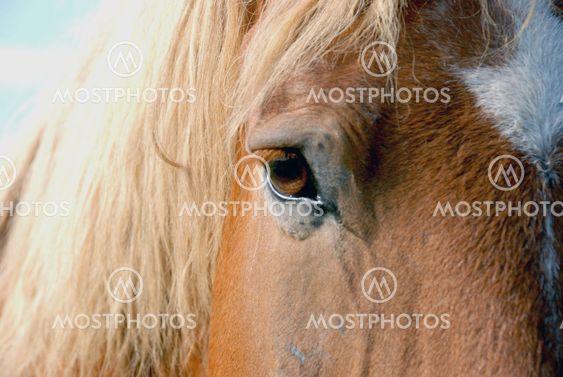 Hevonen silmän