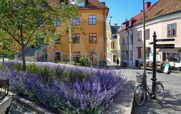 Gatubild med blåa blommor från sommarstaden Visby på...