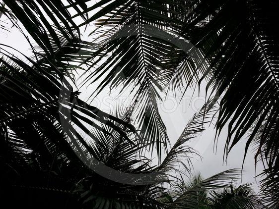 Skyn täckt av palmer